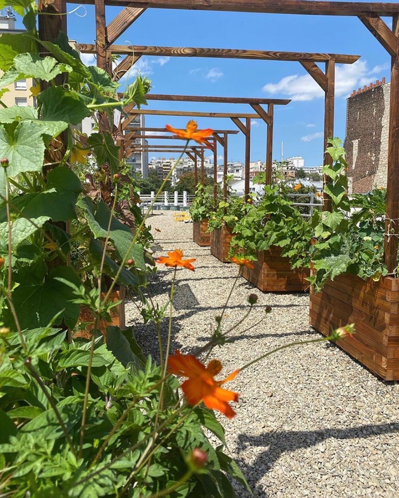 """Insolite : une """"arche végétale"""" sur le toit de l'école Cuisine Mode d'Emploi(s)"""