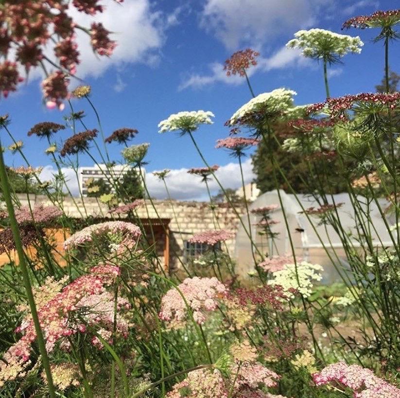 """Fleurs : rendez-vous chez """"Plein Air"""", première ferme horticole de Paris"""