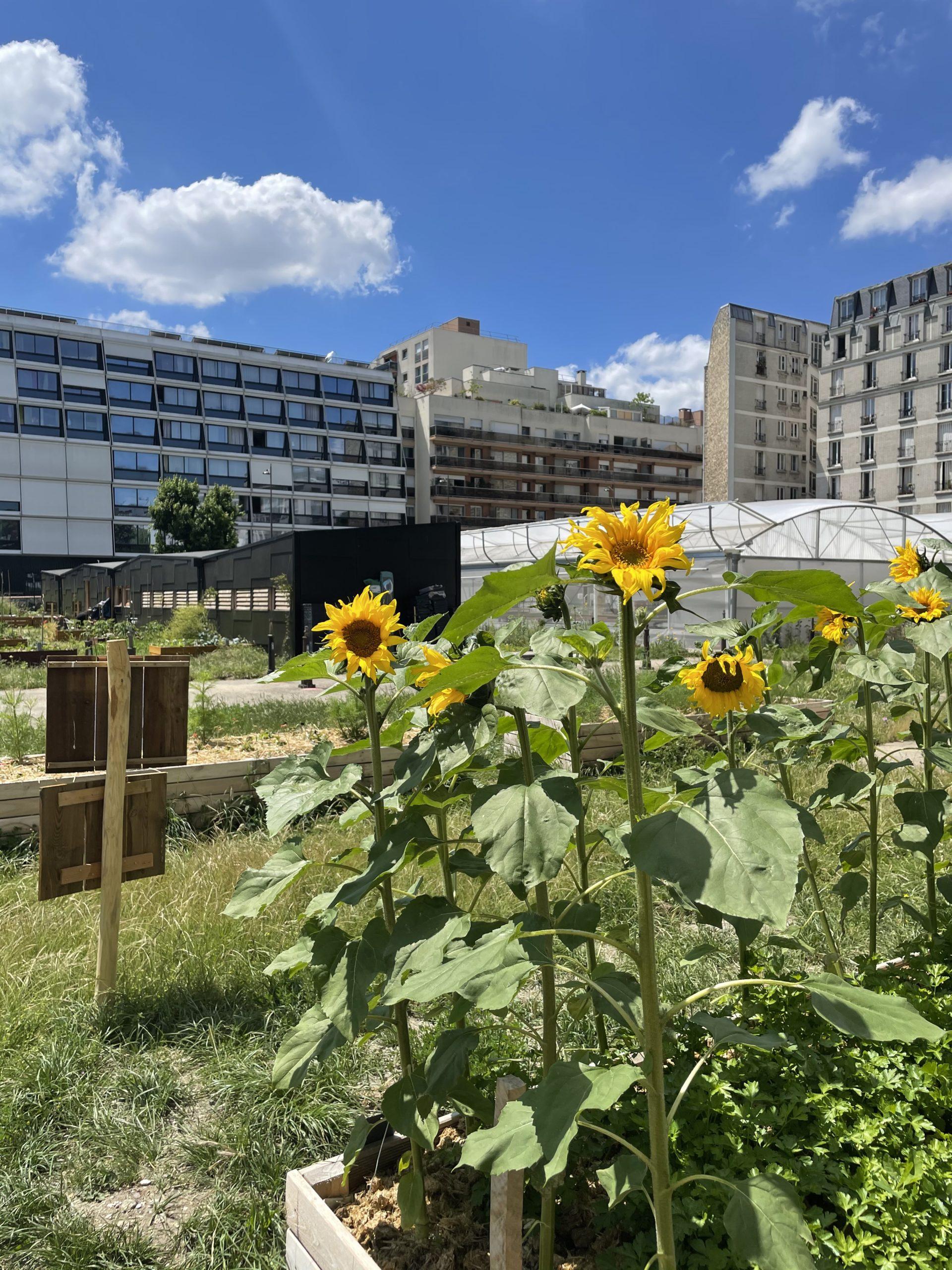Le Paysan Urbain : une ferme installée sur le toit du réservoir de Charonne